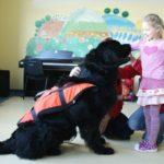 Pies_ratownik6
